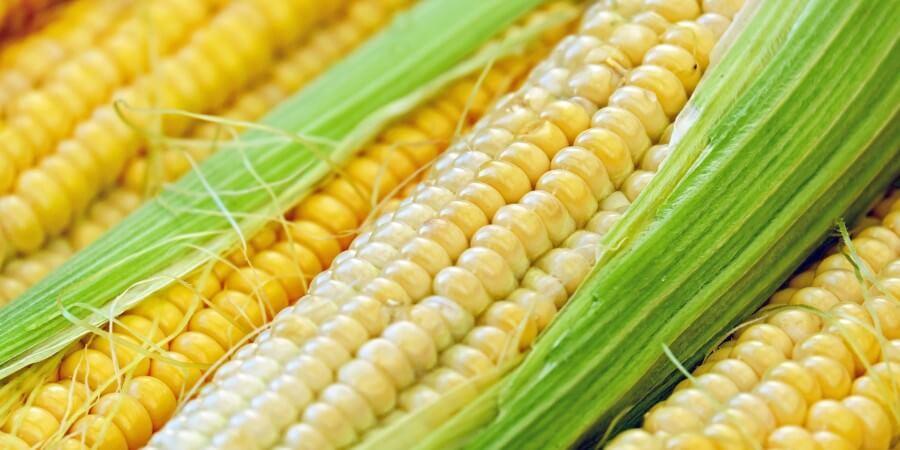 vláknina kukurica zelenina